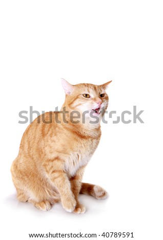angry ginger cat on the white background - stock photo