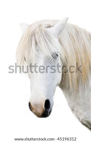 Angry grey pony - stock photo