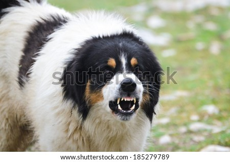 Angry Guard Dog - stock photo