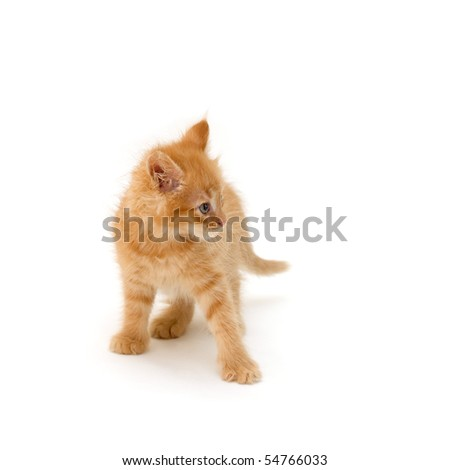 angry kitten isolated on white background - stock photo