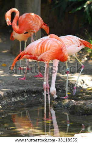animal at the zoo - stock photo
