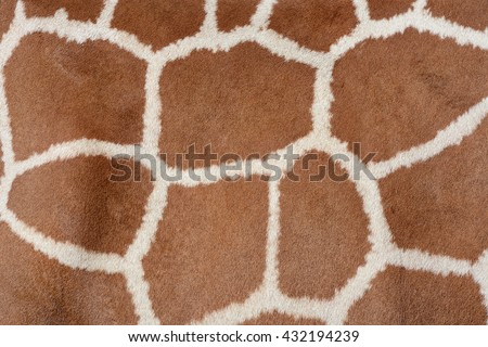 Animal Skin Background Patterned Fur Texture Stock Photo