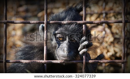 Animal behind bars. Animal cruelty