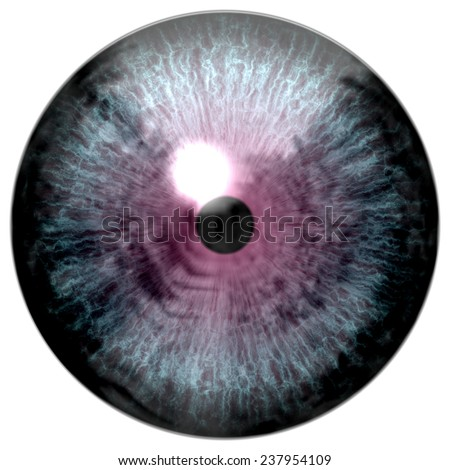Animal blue eye with purple colored iris, detail view into eye bulb.  - stock photo