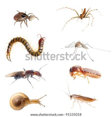animal bug set collection isolated - stock photo