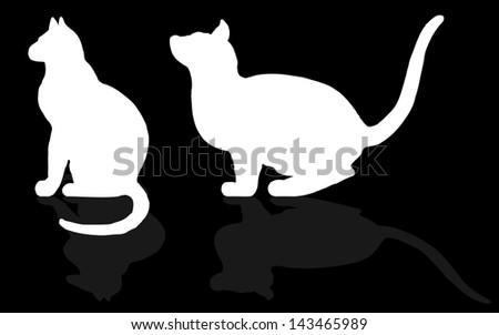 animal - CAT, - stock photo