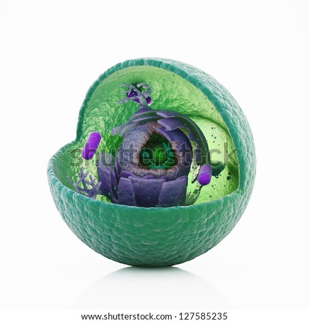Animal cell cut-away - scientifically correct 3d illustration - stock photo
