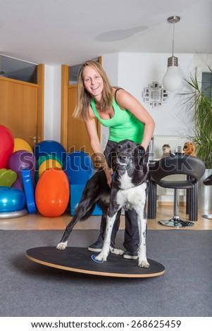 animal clinic - stock photo