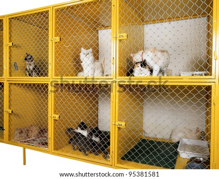 animal clinic - stock photo