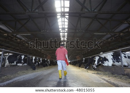animal cow farm - stock photo