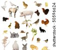 Animal farms on a white background - stock photo