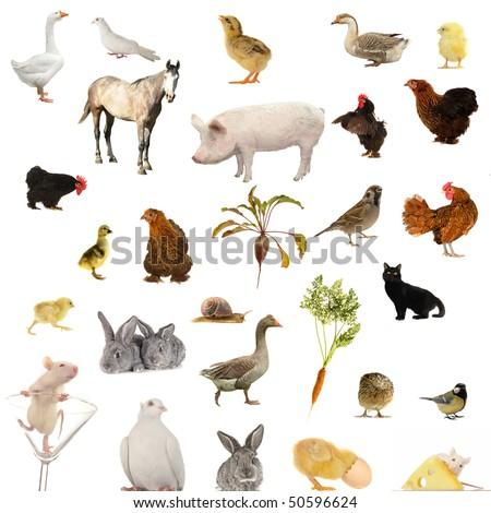 Animal farms on a white background - stock photo
