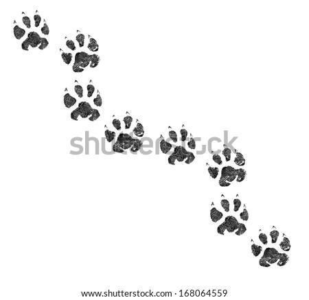 Animal footprint  - stock photo