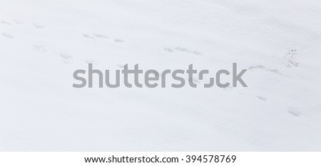 animal footprint on white snow - stock photo