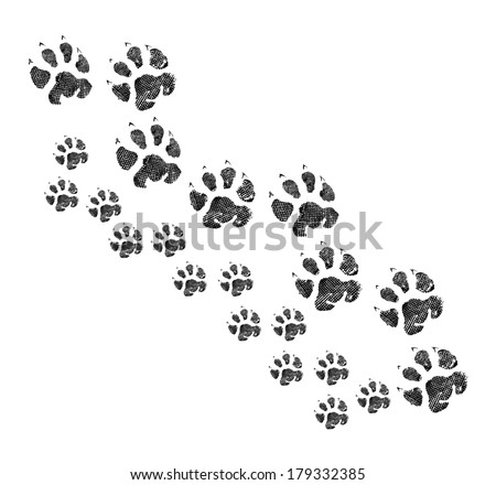 Animal footprint walking together - stock photo