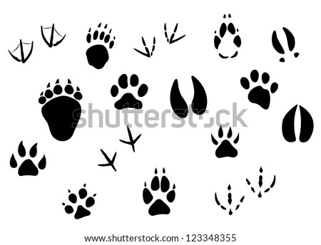 Animal footprints and tracks isolated on white for wildlife concept design, such a logo template. Vector version also available in gallery - stock photo