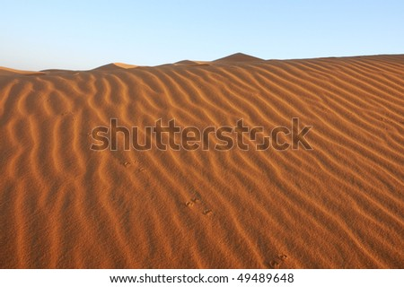 Animal footprints in the dune - stock photo