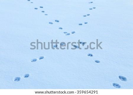 Animal footrint  - stock photo