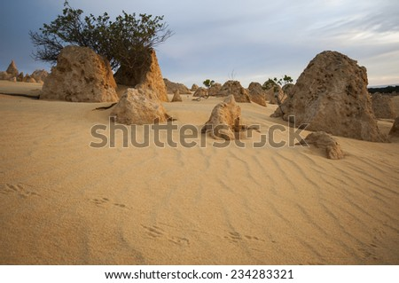 Animal footsteps in the sand, in the Pinnacles Desert at sunset - stock photo