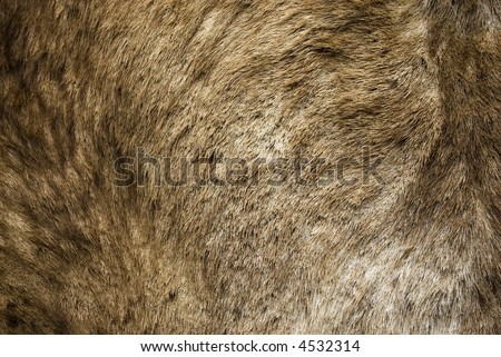 Animal Fur Hair Hide Background Grunge Texture Series 03 - stock photo
