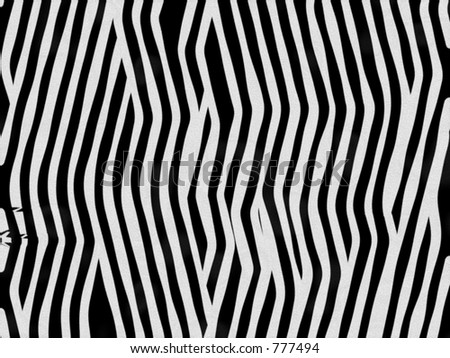 Animal fur texture - zebra - stock photo