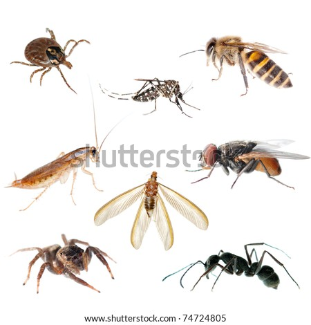animal insect bug set collection - stock photo