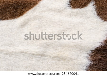 animal nature fur - stock photo