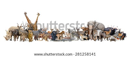 animal of the world isolated on white background - stock photo