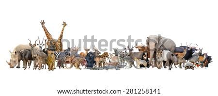 animal of the world isolated on white background - stock photo