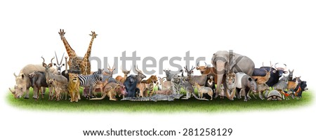 animal of the world with fresh green grass - stock photo