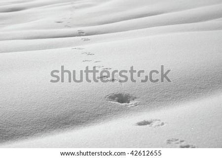 animal path in snow - stock photo