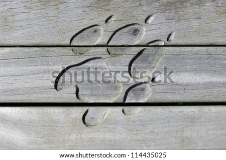 Animal paw print carved out of wood - stock photo