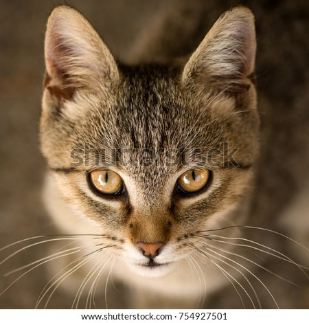 Animal portrait of young cute tabby cat.