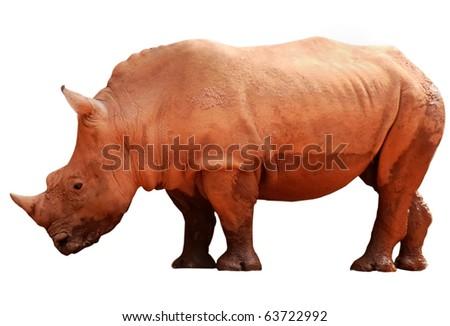animal rhino isolated on white background - stock photo