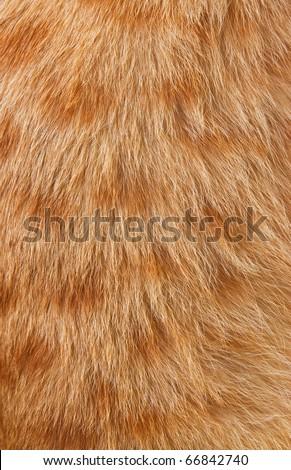 Animal's fur texture - stock photo