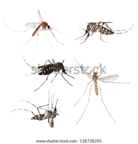 animal set, mosquito bug collection isolated - stock photo