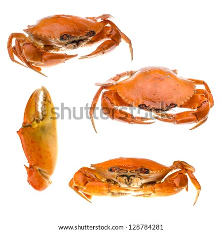 animal set, seafood crab collection isolated on white - stock photo