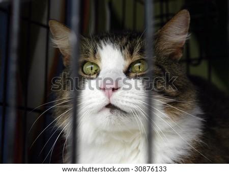 Animal Shelter Orphaned Pet - stock photo