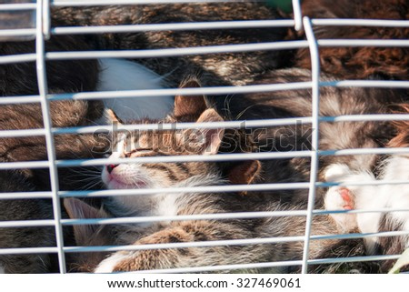 Animal Shelter Orphaned Pet. Many Cute Kittens in Cage Closeup - stock photo