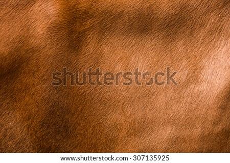 animal skin - genuine texture cow brown grey background - stock photo