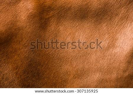 animal skin - genuine texture cow brown grey background - stock photo
