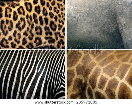 Animal skin texture (leopard, zebra, elephant, giraffe) - stock photo