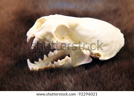 Animal Skull - stock photo