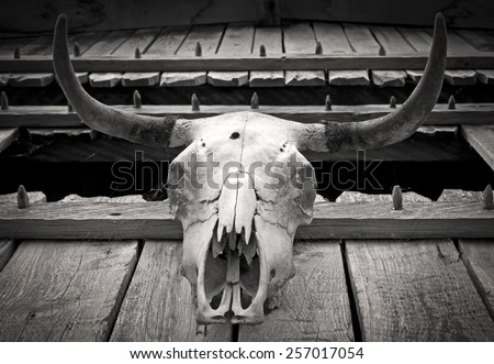 Animal Skull Symbol Pagan Cult Worship Stock Photo Edit Now