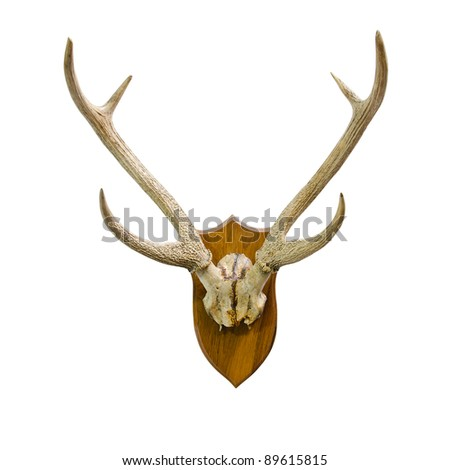 Animal skull with horn
