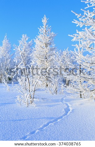 Animal trace on the edge of a winter forest in Siberia - stock photo