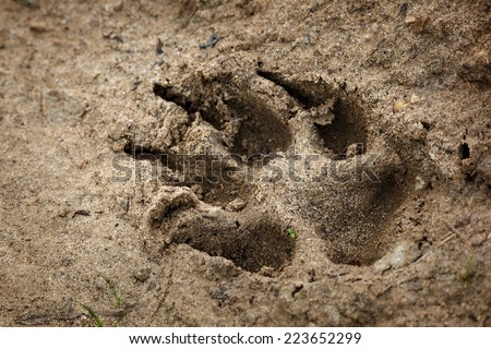 Animal traces on the earth  - stock photo