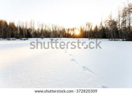 Animal traces on the snowy surface of frozen lake - stock photo