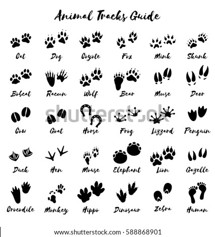 Animal tracks on engine white background