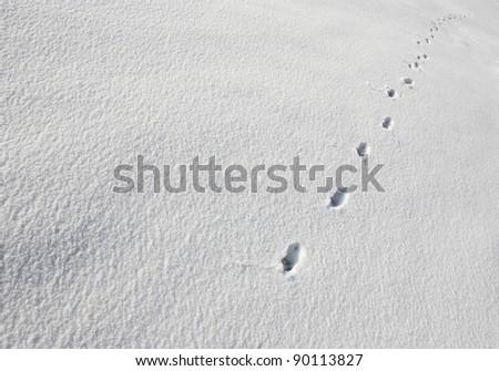 Animal tracks in snow - stock photo